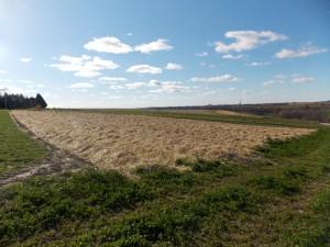 Garlic field ready for winter